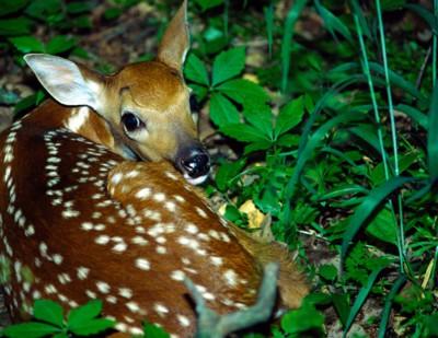 Deer poster PH7649402