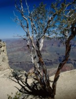 Grand Canyon National Park picture PH7670096
