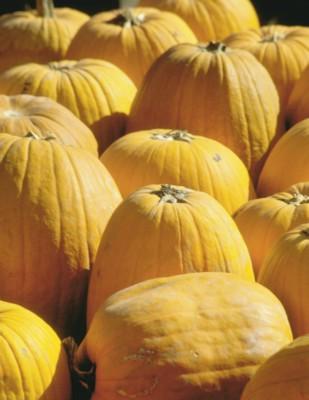 Pumpkin poster PH7684697