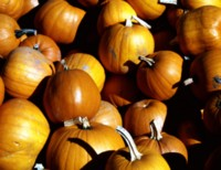 Pumpkin picture PH7658481