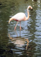 Flamingo picture PH9851564