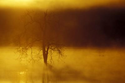 Fog poster PH7711015