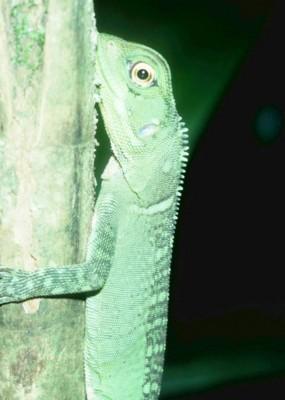 Lizard poster PH7711545