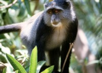 monkey picture PH7712528
