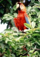 Parrot picture PH7716782