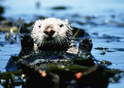 Otter poster PH7717190