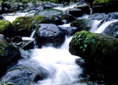 Mount Rainier National Park poster PH7721000