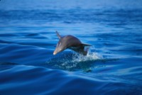 Dolphin picture PH7767556