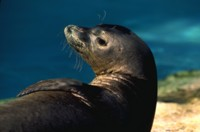 SeaLion picture PH7777106