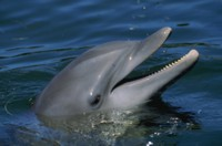 dolphin picture PH7777212