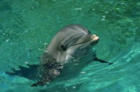 dolphin picture PH7777244