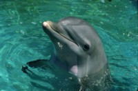 dolphin picture PH7777284