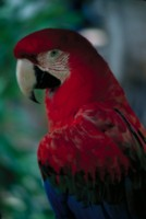 Parrot picture PH7793731