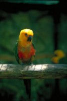 Parrot picture PH7793875