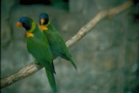 Parrot picture PH7793911