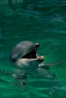 Dolphin picture PH7794482
