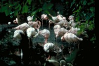 Flamingo picture PH7794878