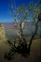 Grand Canyon National Park picture PH7797108