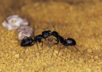 Ant picture PH7798722