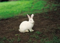Rabbit picture PH7799626