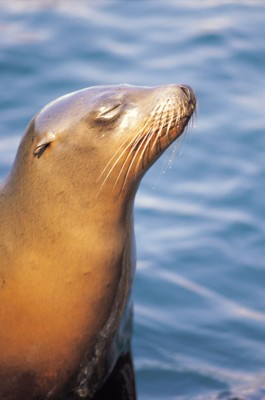 SeaLion poster PH7804767