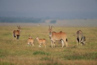 Antelope & Gazelle picture PH7809780