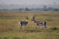 Antelope & Gazelle picture PH7809834