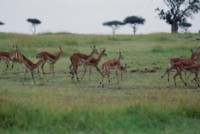 Antelope & Gazelle picture PH7809893