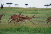 Antelope & Gazelle picture PH7809928