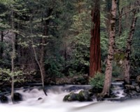 Yosemite National Park picture PH9791806