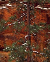 Zion National Park picture PH9792043