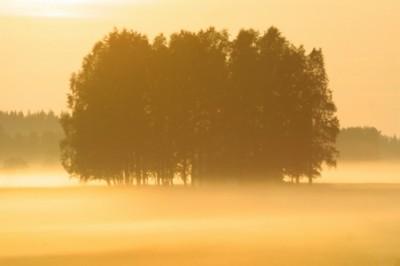 Fog poster PH9875764