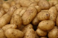 Potatoes picture PH9907802