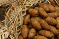 potatoes picture PH9962902